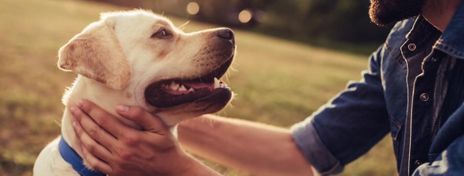 So belohnen Sie Ihren Hund richtig.