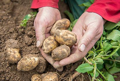 Biologischer Landbau kommt ohne synthetischen Dünger und chemische Spirtzmittel aus.