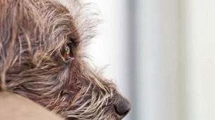 /.content/images/pet/2015_11_18_Suenden-der-Hundererziehung.jpg