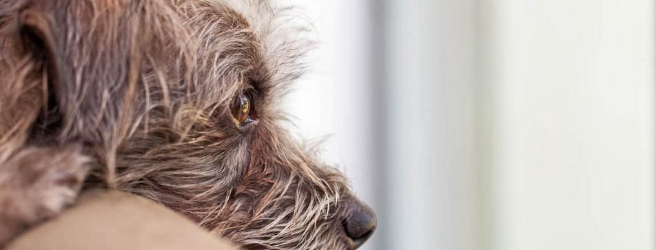 Hundeerziehung soll klar und verständlich für den Vierbeiner sein.