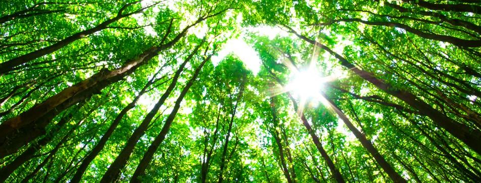 Natürliche Inhaltsstoffe zu gewohnt günstigen Preisen: die nature-Produkte bei dm bieten eine nachhaltige Alternative im Sortiment.