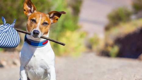 /.content/images/pet/2016_03_24_Hund-zieht-ein.jpg