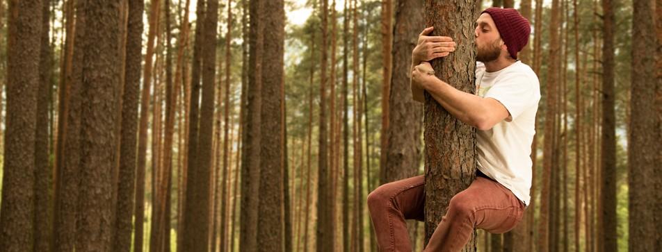 Der Wald strahlt Ruhe und Energie aus.