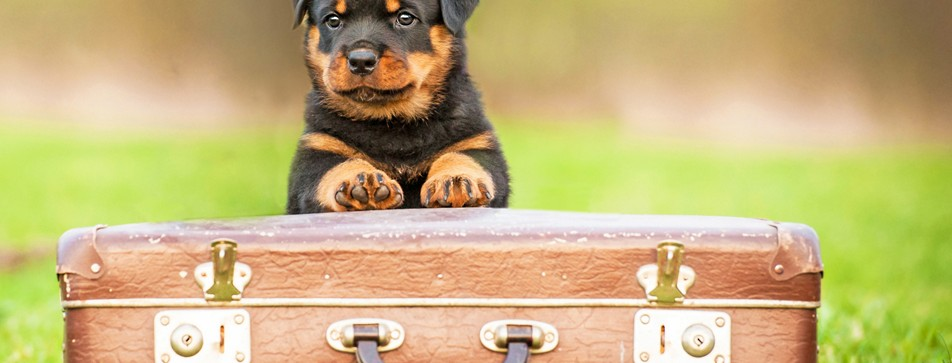 Wohin mit dem Hund im Urlaub? Mitnehmen oder eine Tierpension finden.