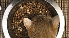 Katze auf Diät