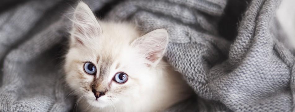 Katzenhaare auf der Kleidung loswerden