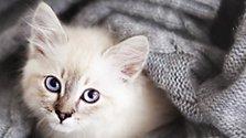 Katzenhaare loswerden