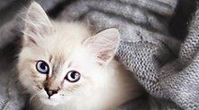 /.content/images/pet/Katzenhaare-loswerden-Headerbild-1366x521-px.jpg