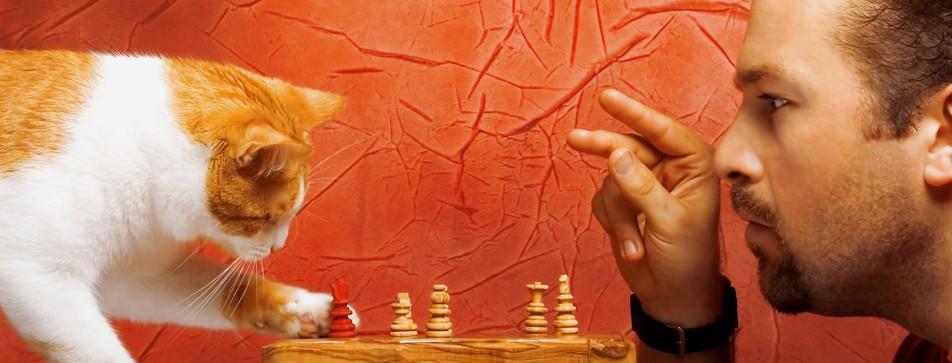 Katzen beschäftigen sich nicht immer alleine. Sie möchten auch, dass man mit ihnen spielt.