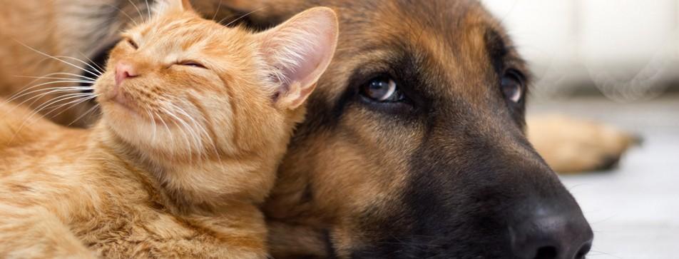 Tipps, wie sich Hund und Katze bei Ihnen wohlfühlen.