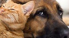 So fühlen sich Hund und Katz wohl bei uns