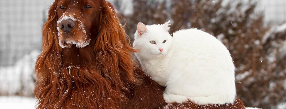 Der Tiername sollte zum Charakter des Haustiers passen.
