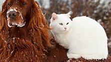 /.content/images/pet/tiernamen_dm_online_shop_karussell.jpg