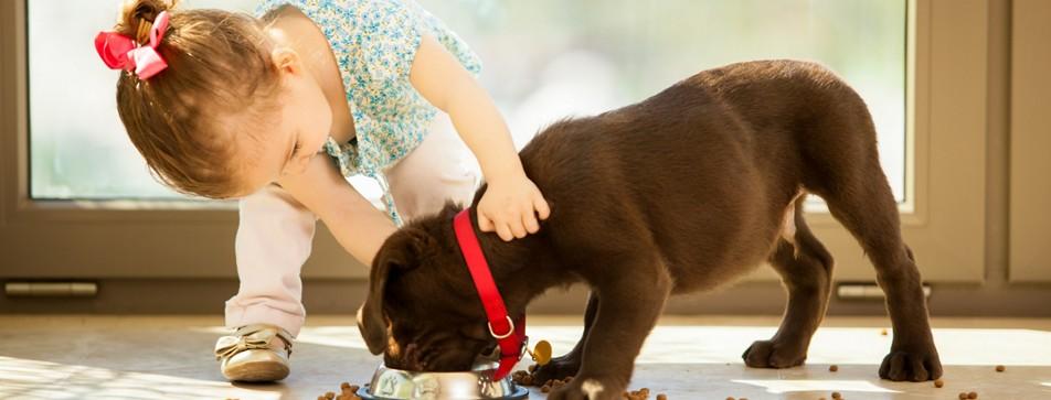 Der Kontakt zwischen Kind und Hund ist von Beginn an wichtig.