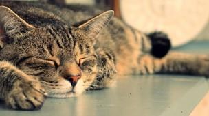/.content/images/pet/Glueckliche-Katze-dm-Online-Shop.jpg