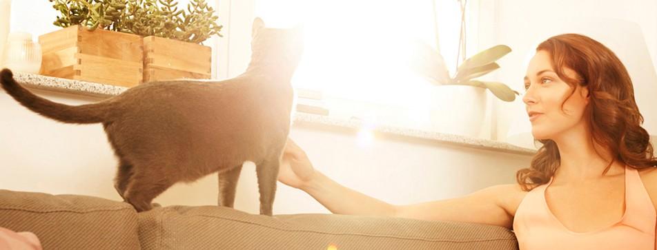 Katzenspiele, Streicheleinheiten und Rückzugsmöglichkeiten mit Ausblick machen Katzen glücklich.