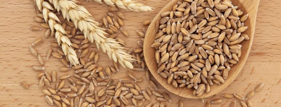 Alte Getreidesorten sind wieder beliebt.