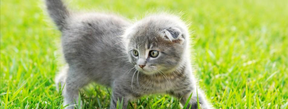 Katzen zeigen vor allem durch ihre Körpersprache, wie sie sich fühlen.