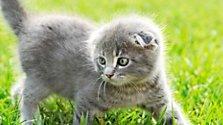 Körpersprache bei Katzen