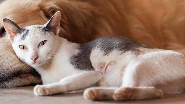 /.content/images/pet/2015_10_07_Katze-und-Hund.jpg