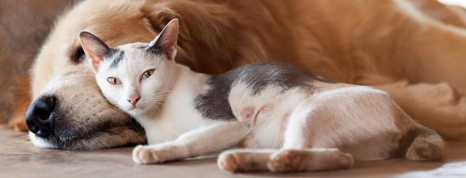 Hund und Katze: Es muss nicht immer Feindschaft sein.