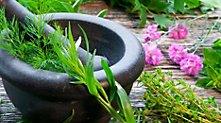 /.content/images/care/Kraeuter-aus-dem-Garten.jpg