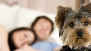 /.content/images/pet/Headerbild-Flirtfaktor-Hund.jpg