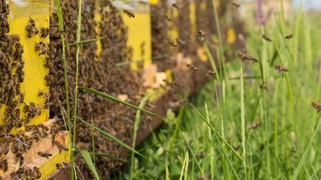 /.content/images/food/Urban_Bee_Keeping_Header.jpg