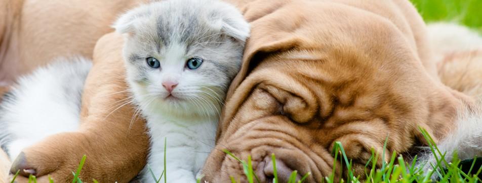 Hundekekse, Leckerli und Spielzeug: Darüber freuen sich unsere Haustiere.