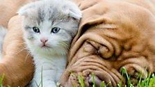Kleine Geschenke für Haustiere