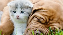 /.content/images/pet/Valentierstag_dm_online_shop.jpg