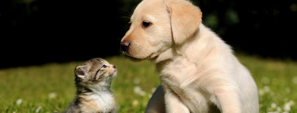 Sind Sie ein Hundemensch oder ein Katzenmensch?