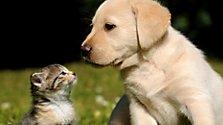 Hundemensch oder Katzenmensch?